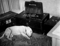 Patton's dog, Willie, mourning the loss of his master.