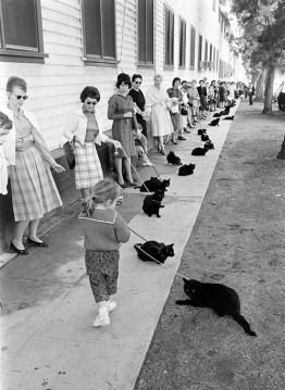 Black cat audition day, for some TV show or movie.