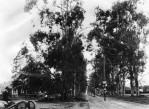 Santa-Monica-Blvd.-at-Western-looking-west-1902-620×454