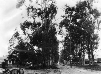 Santa Monica Blvd at Western. 1902.